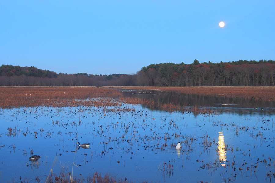 Full Moon At Great Meadows National Wildlife Refuge Photograph