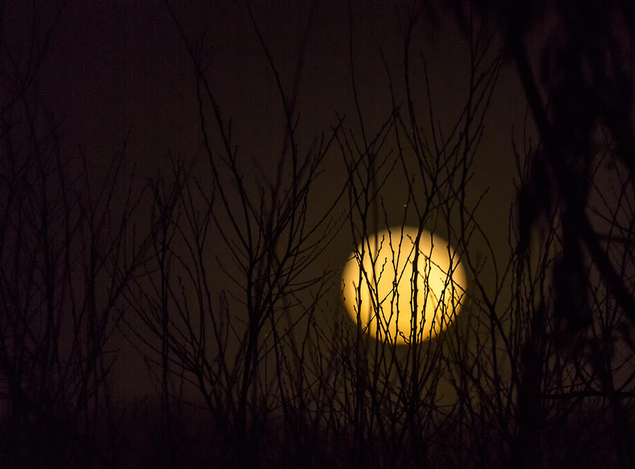 Full Moon Behind The Trees Photograph