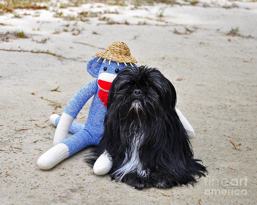 Monkey Photograph - Funky Monkey And Sweet Shih Tzu by Al Powell Photography USA