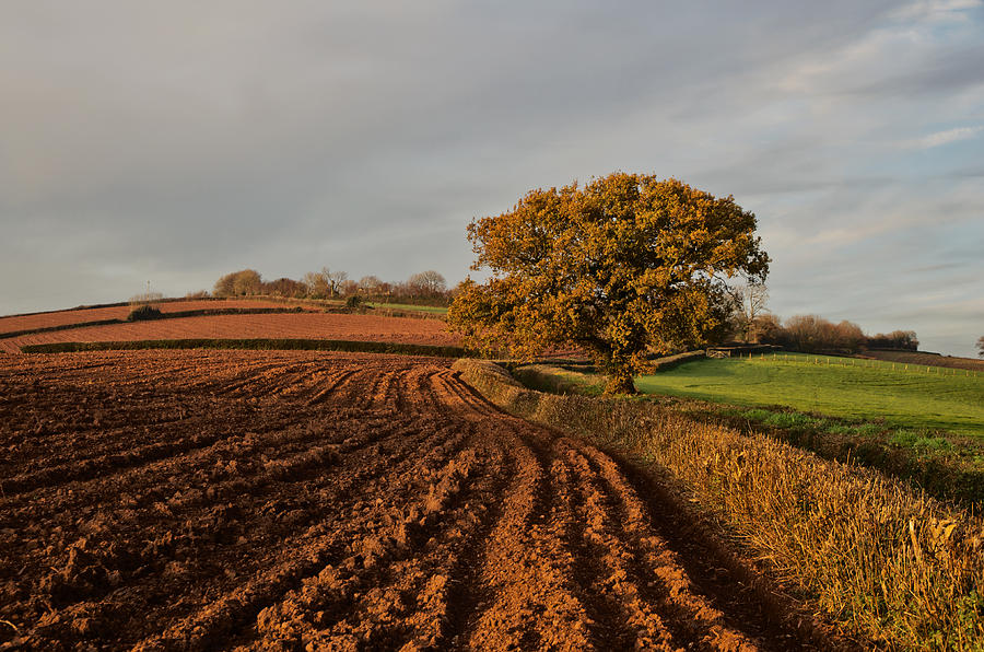 Furrows And Field Photograph