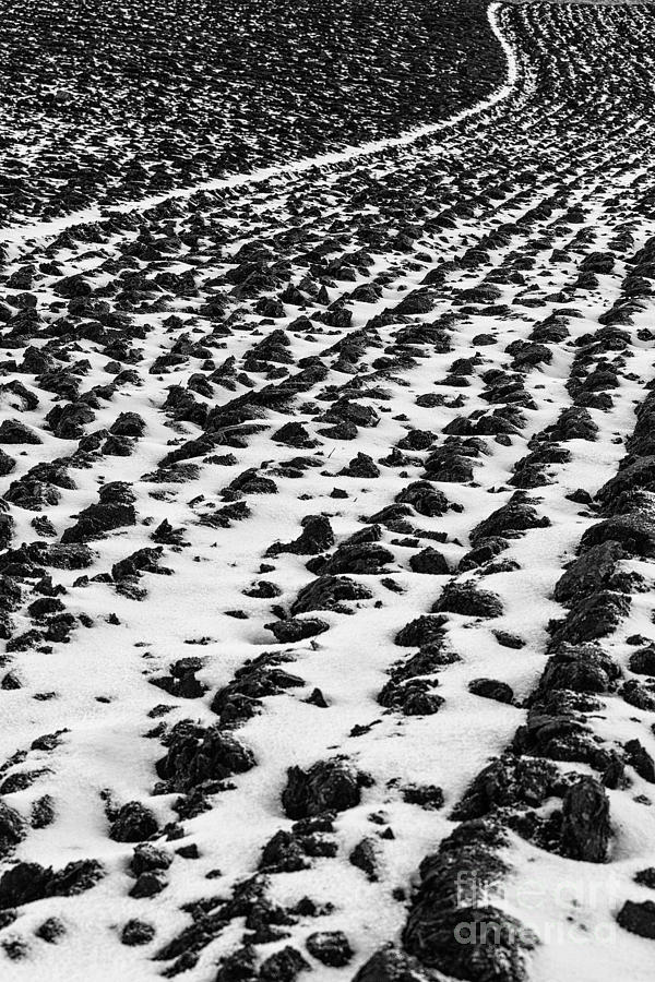 Furrows Photograph  - Furrows Fine Art Print