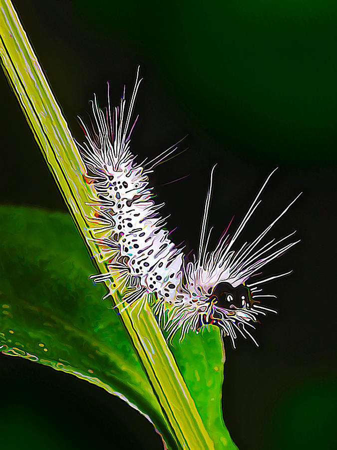 Fuzzy Caterpillar Digital Art