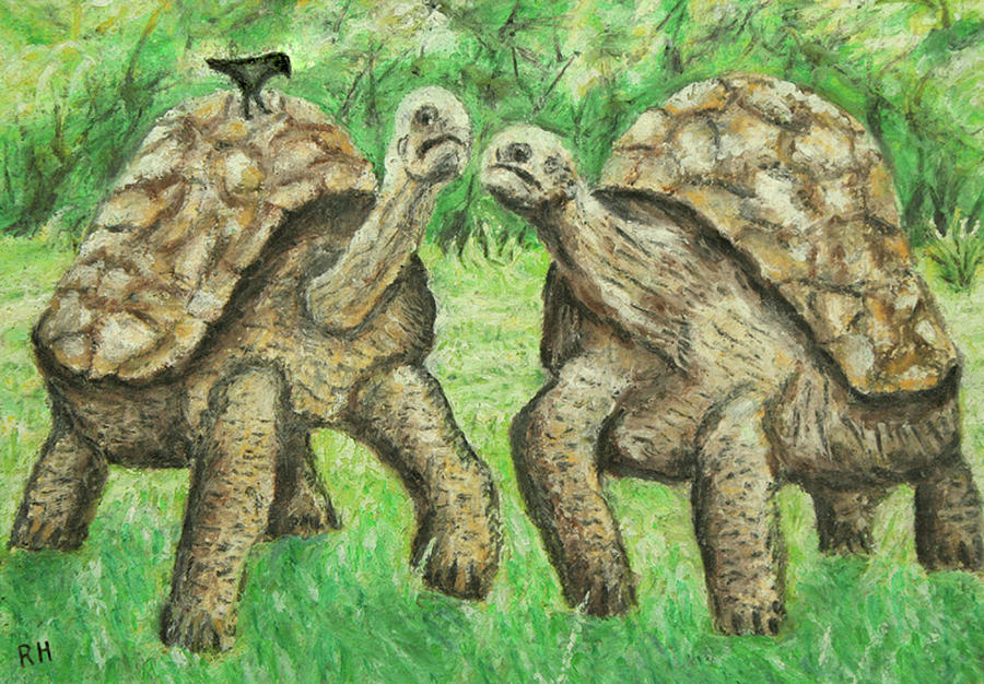 Galapagos Giant Tortoise Painting