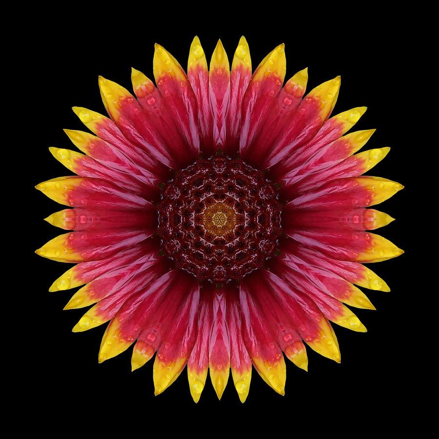 Galliardia Arizona Sun Flower Mandala Photograph