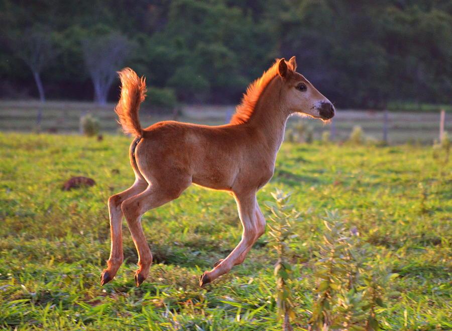 Horse Photograph - Gallop by Paulo Zerbato