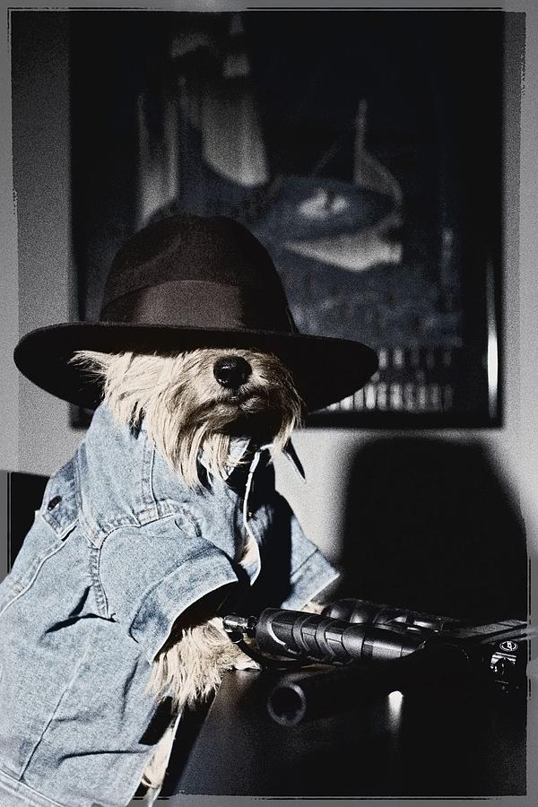 Gangster Dog Photograph