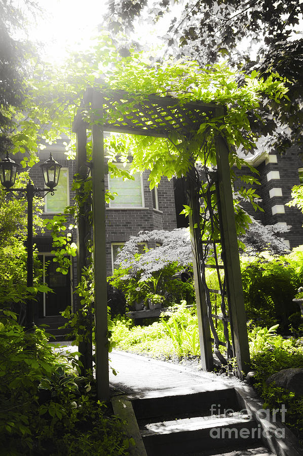 Garden Arbor In Sunlight Photograph  - Garden Arbor In Sunlight Fine Art Print