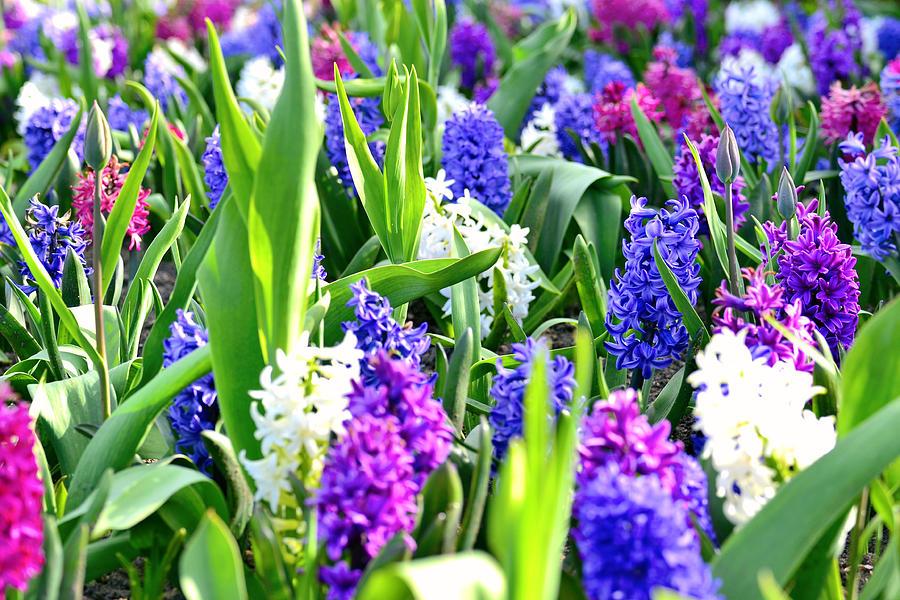 Garden Flowers Photograph