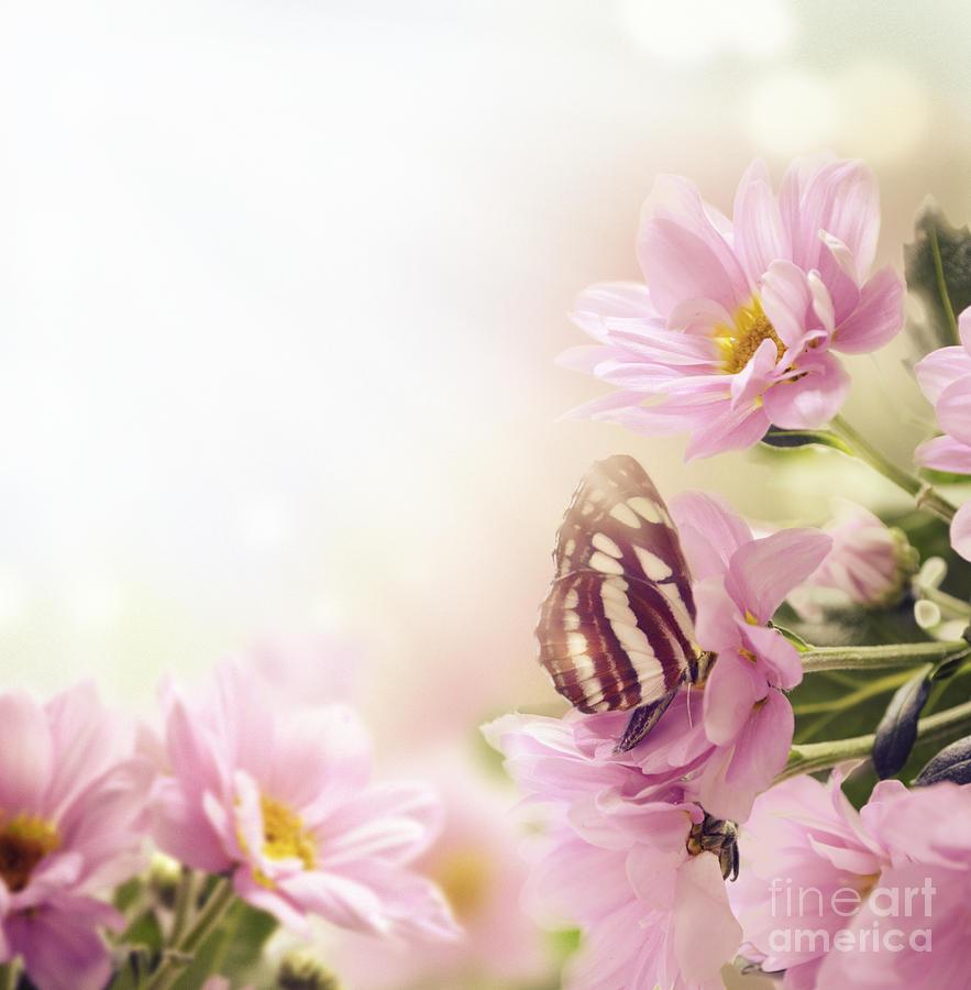 Flower Photograph - Garden by Jelena Jovanovic