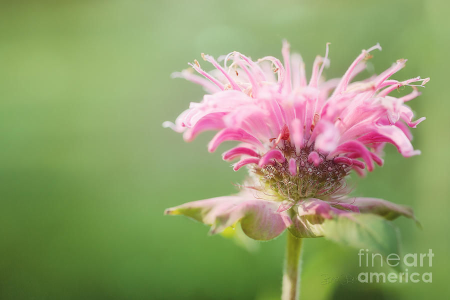 Garden Jester Photograph