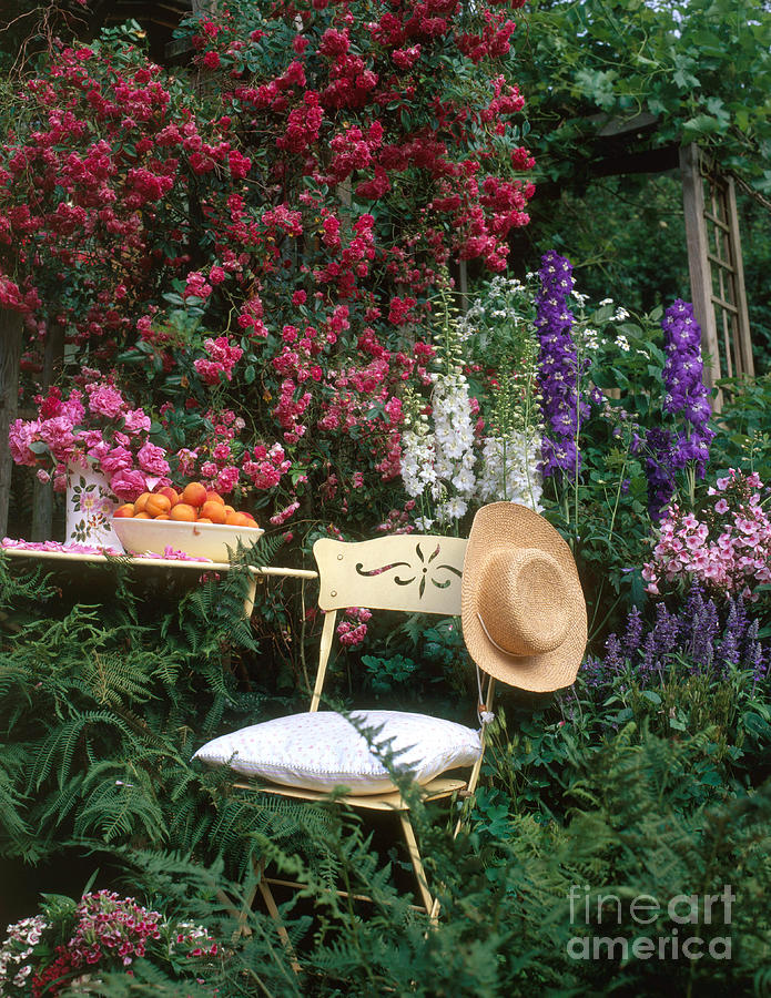 Garden With Chair Photograph