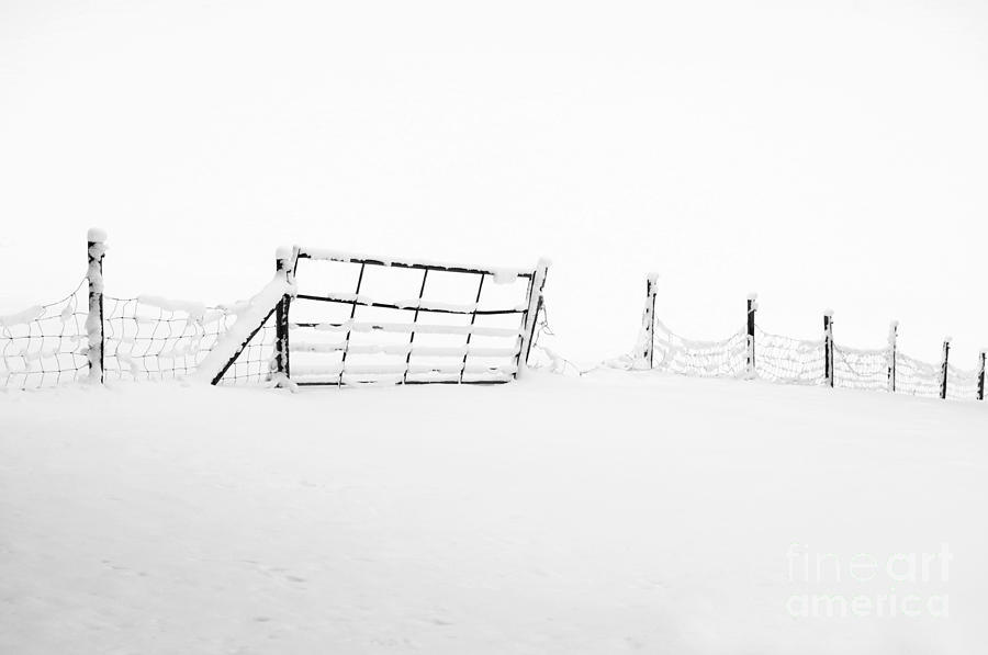 Gate In Snow Photograph
