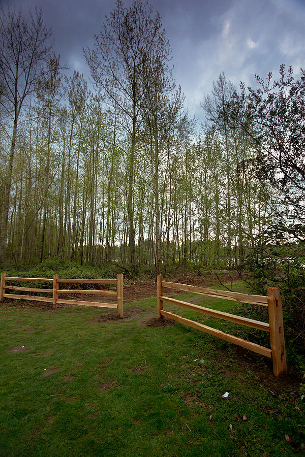Gates To The Birch Wood Photograph  - Gates To The Birch Wood Fine Art Print