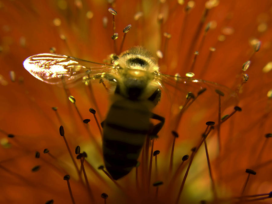 Nectar Photograph - Gathering Nectar by Camille Lopez