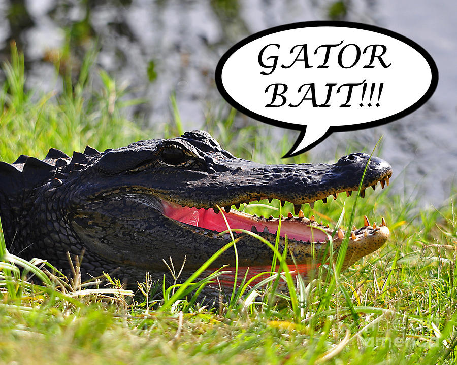 Gator Bait Greeting Card Photograph