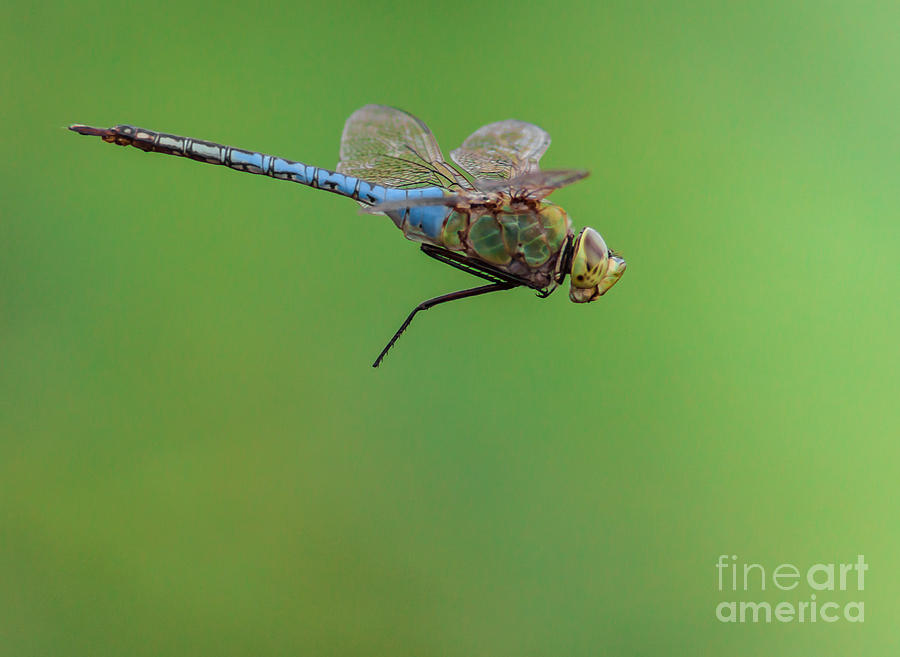 Dragonfly Photograph - Gear Malfunction by Robert Frederick