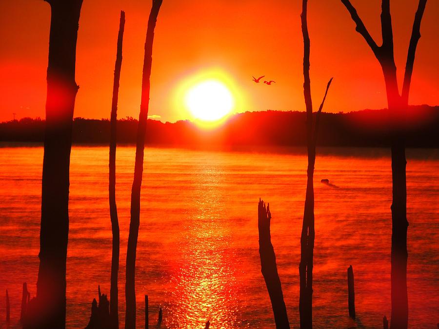 Geese Sunrise Photograph