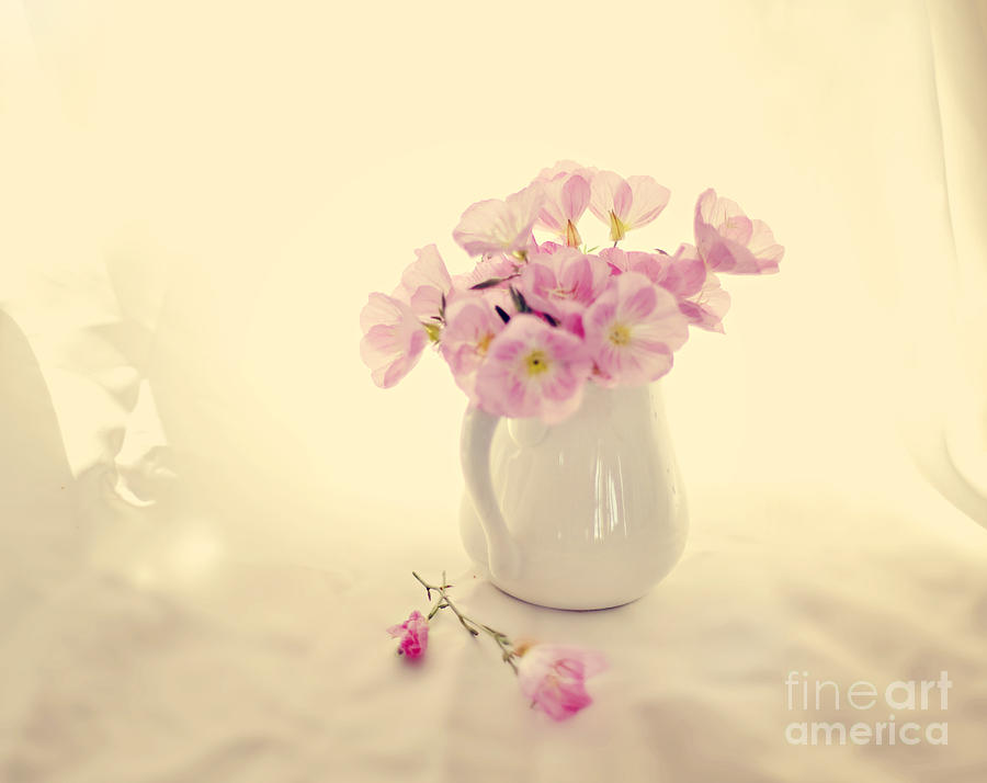 Pink Primroses Photograph - Gentle Light by Linde Townsend