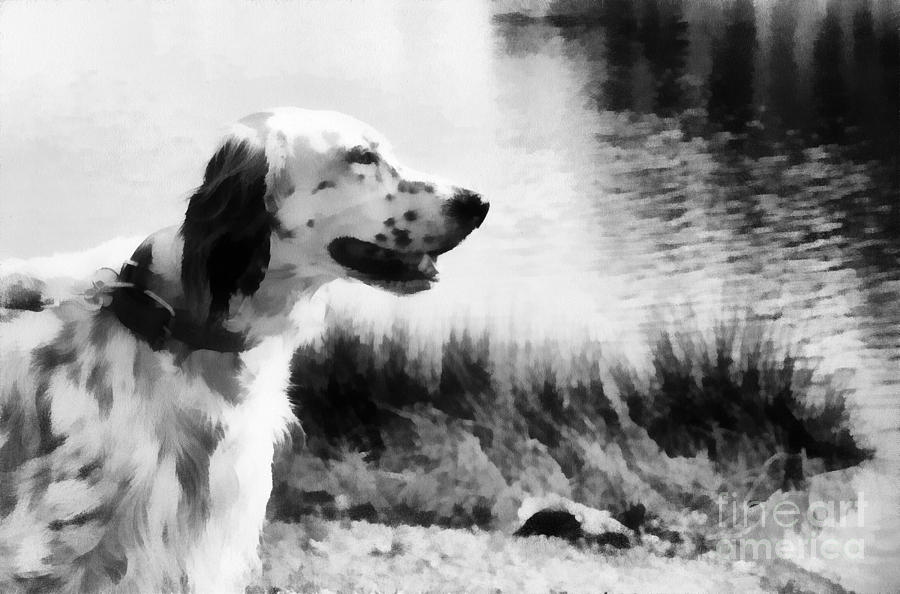 Gentleman By Nature. English Setter. Monochrome Photograph  - Gentleman By Nature. English Setter. Monochrome Fine Art Print