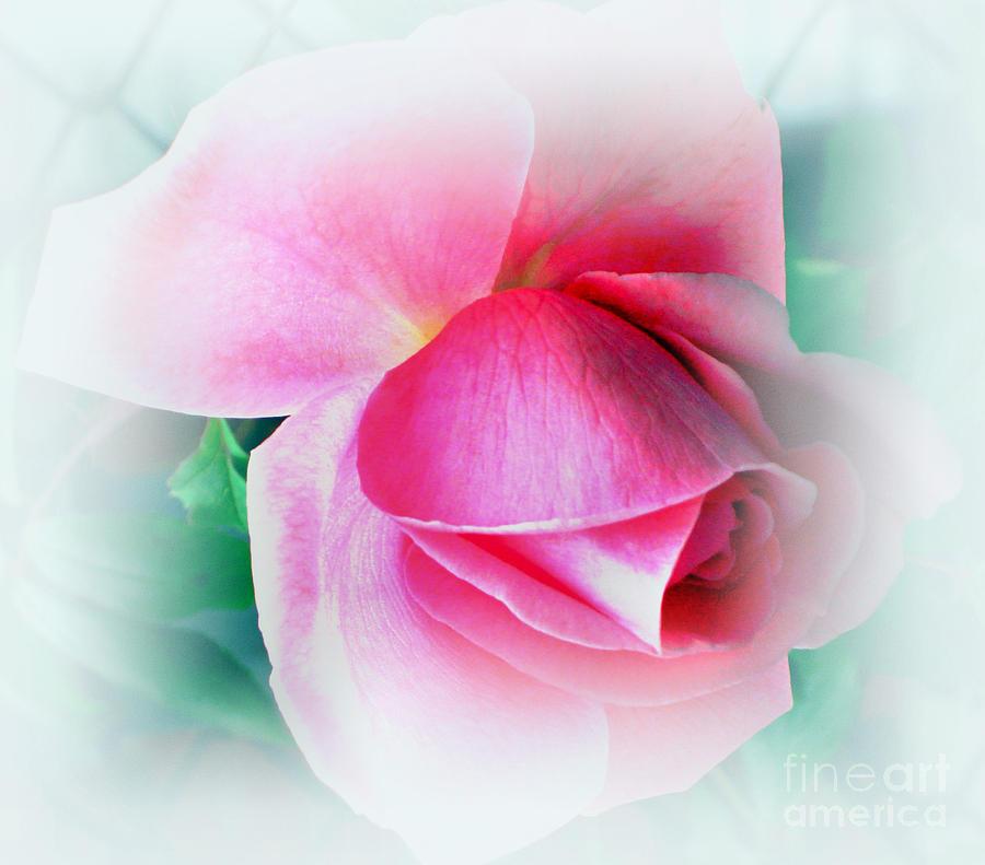Pink Photograph - Gentleness And Grace by Judy Palkimas
