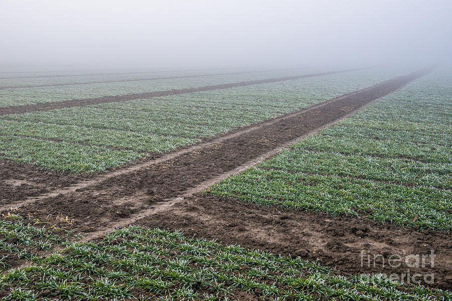 Geometry In Agriculture Photograph