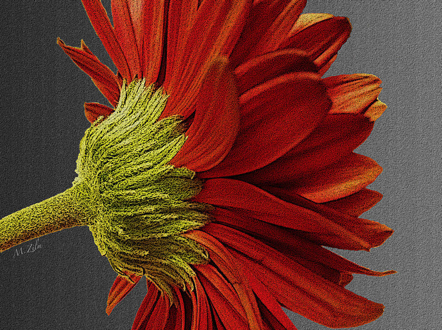 Gerbera In Red Digital Art