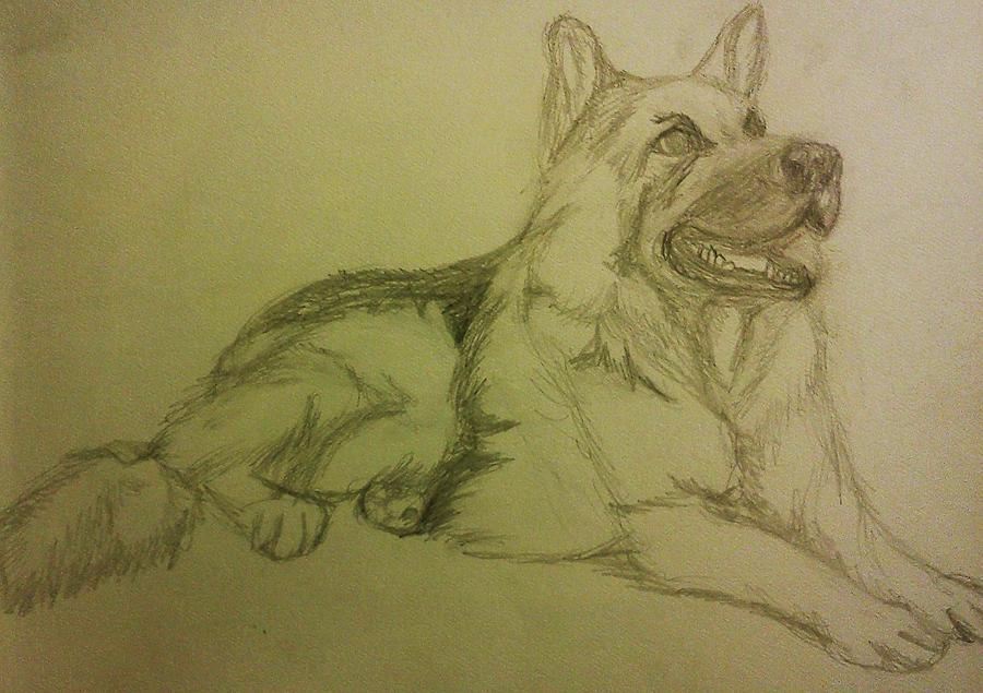 Dogs Drawing - German Shepherd by Christy Saunders Church