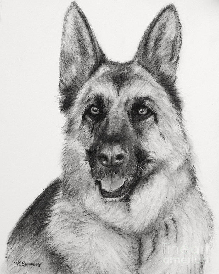 how to draw a realistic german shepherd
