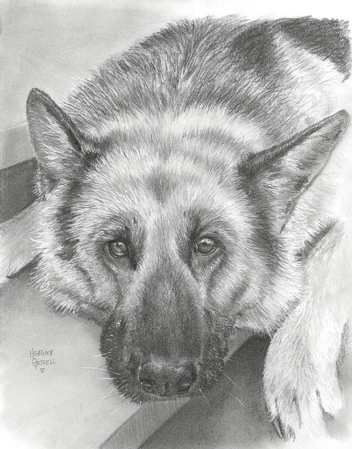 German Shepherd Drawing  - German Shepherd Fine Art Print