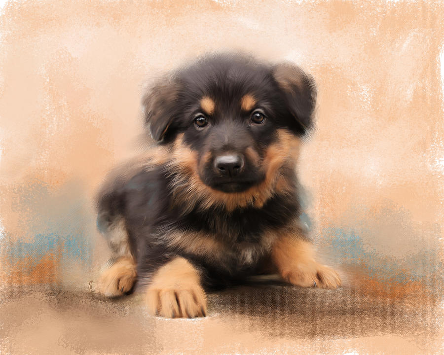 German Shepherd Puppy Portrait Painting  - German Shepherd Puppy Portrait Fine Art Print
