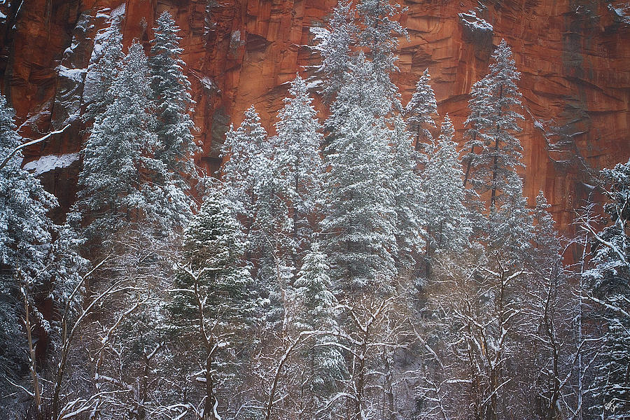 Sedona Photograph - Ghosts Of Winter by Peter Coskun