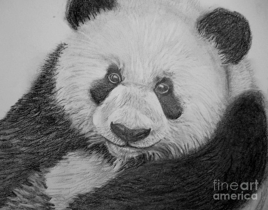 Panda Drawings In Pencil Giant Panda DrawingPanda Drawing In Pencil