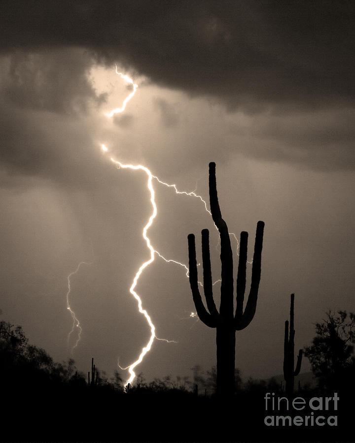 Giant Saguaro Cactus Lightning Strike Sepia  Photograph