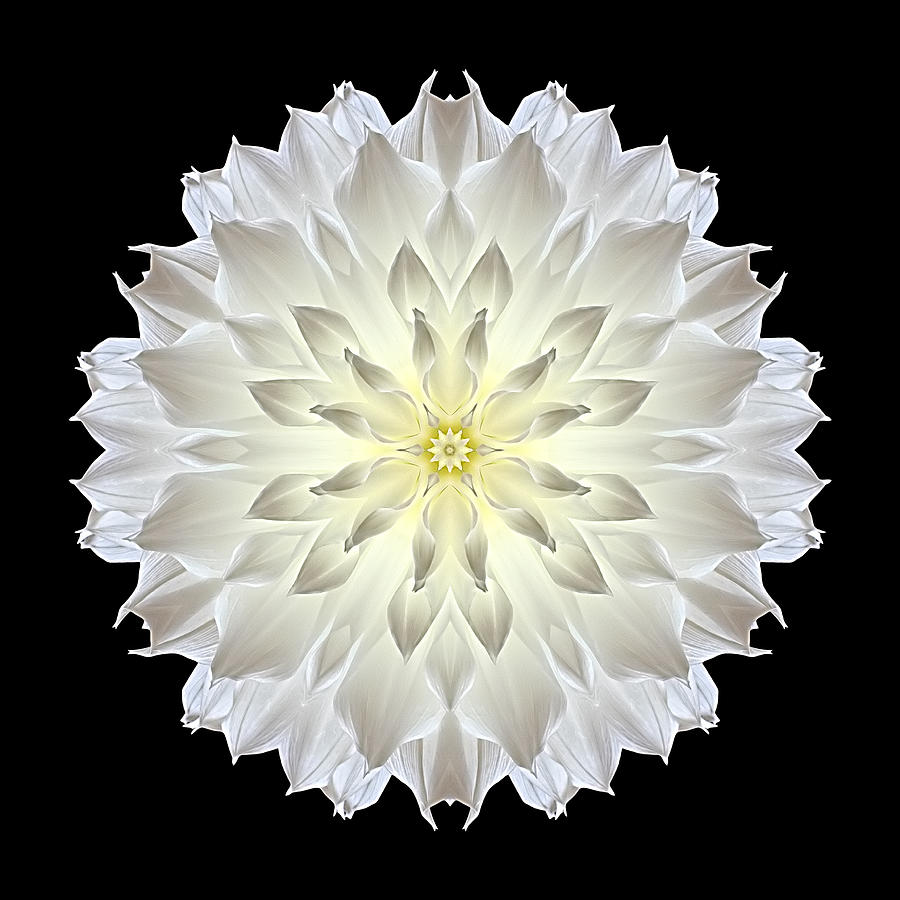 Giant White Dahlia Flower Mandala Photograph