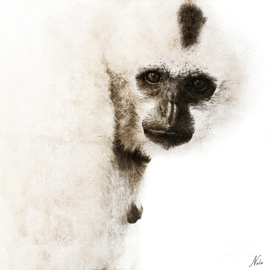 Gibbon #1 Digital Art  - Gibbon #1 Fine Art Print