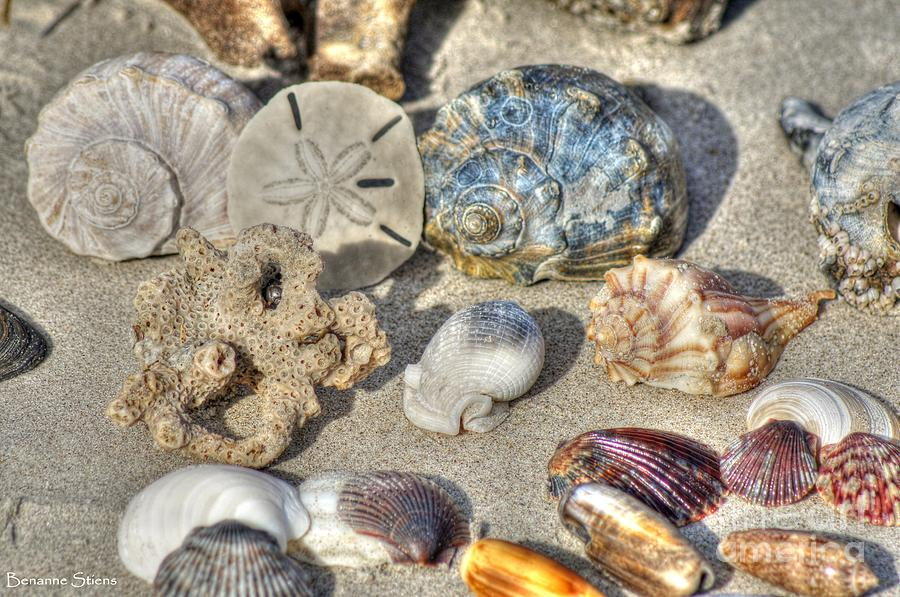 Seashells Photograph - Gifts Of The Tides by Benanne Stiens