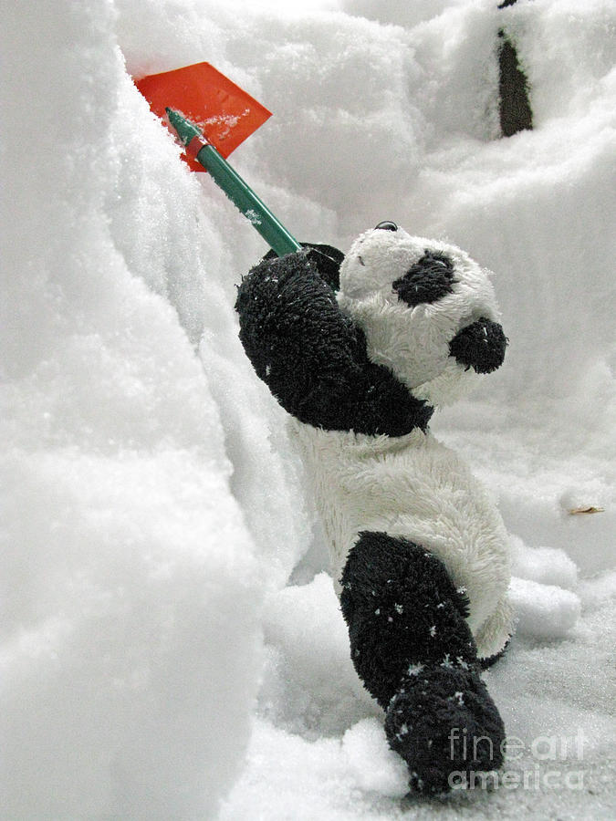 Ginny The Baby Panda In Winter #01 Photograph
