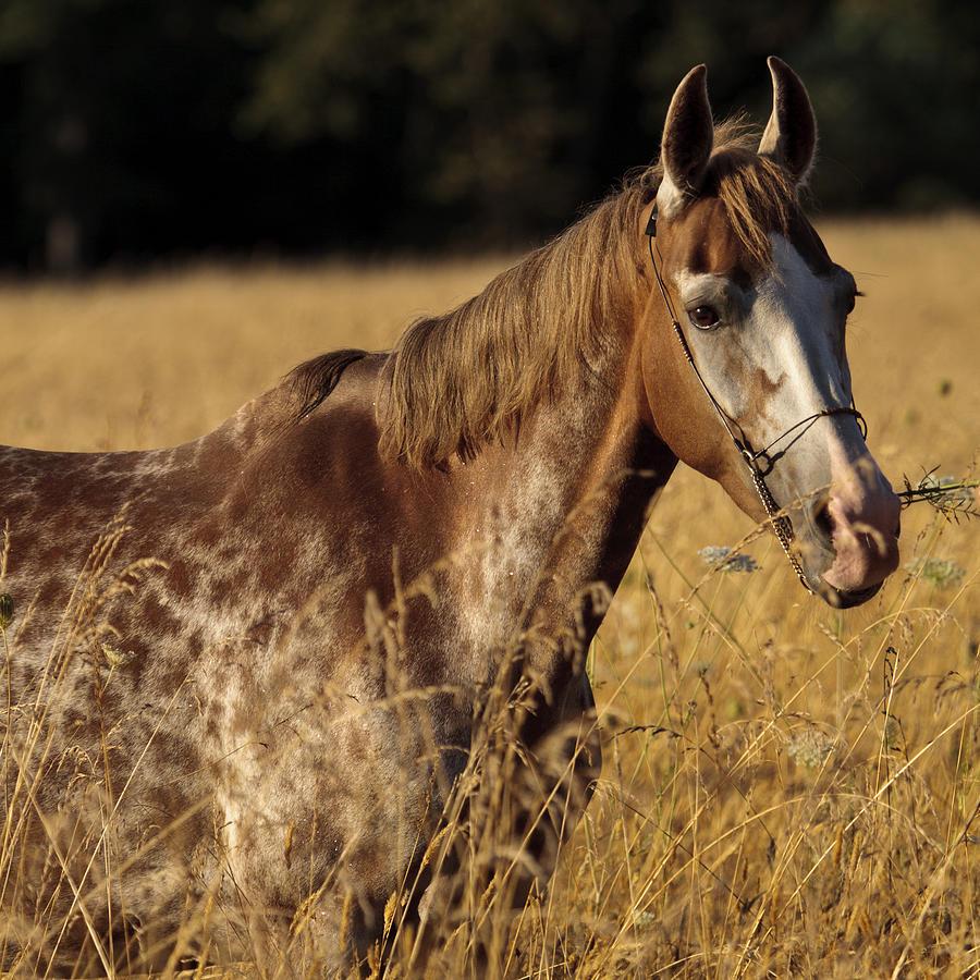 Giraffe Horse D7330 Photograph