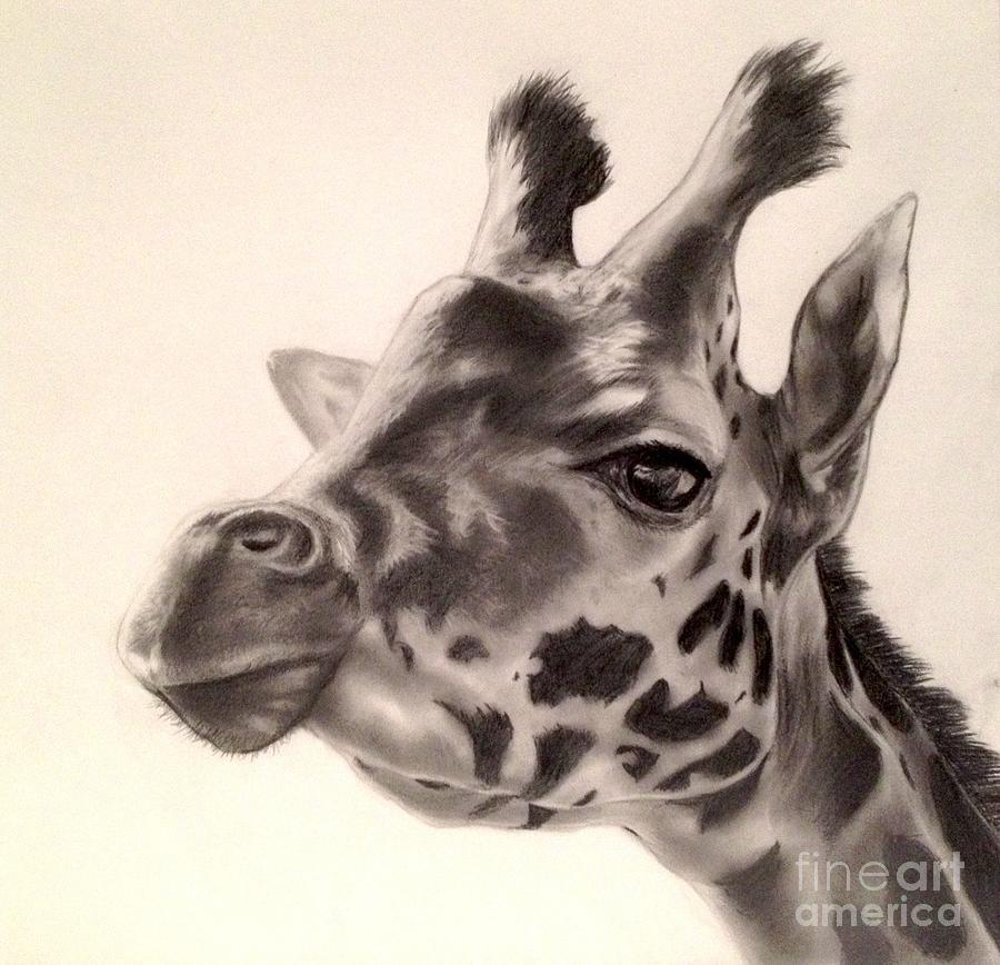 Giraffes in Love Drawing Giraffe Drawing