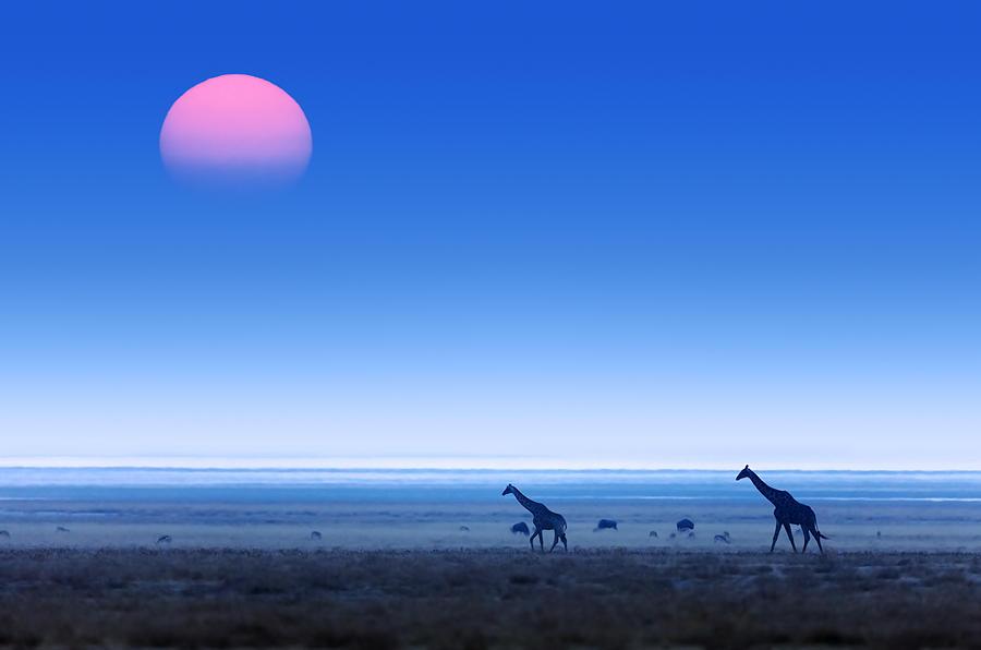 Giraffes On Salt Pans Of Etosha Photograph