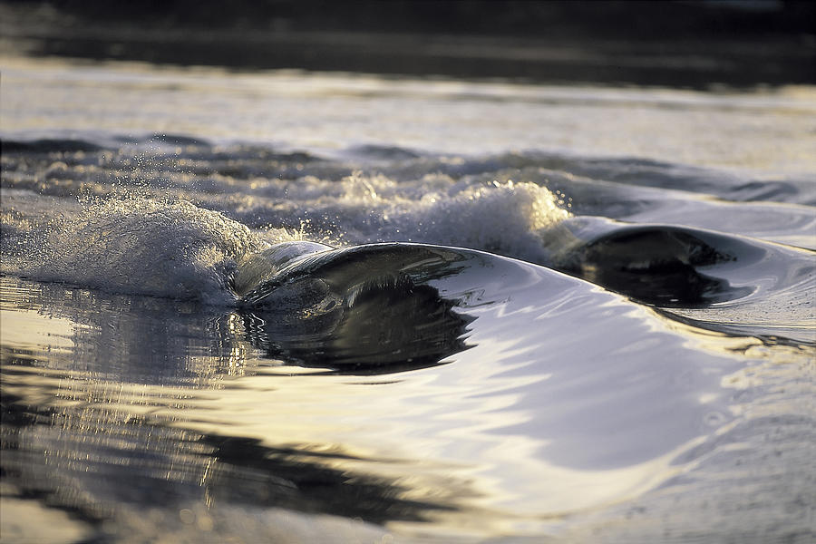 Wave Photograph - Glass Bowls by Sean Davey