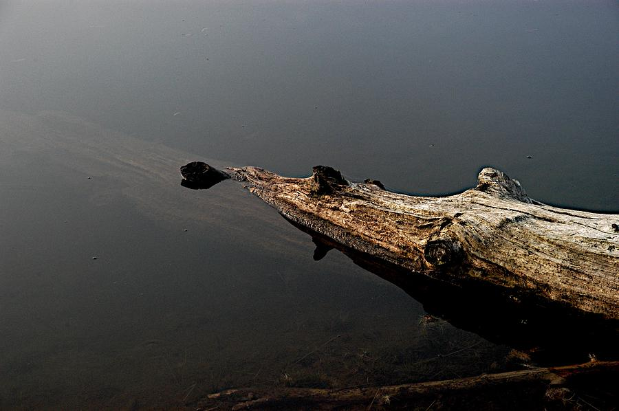 Lake Photograph - Glens Log by Joseph Yarbrough