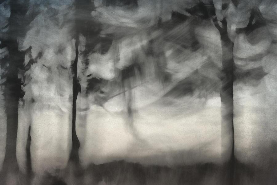 Glimpse Of Coastal Pines Photograph
