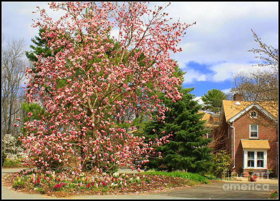 Glimpses Of Spring Photograph