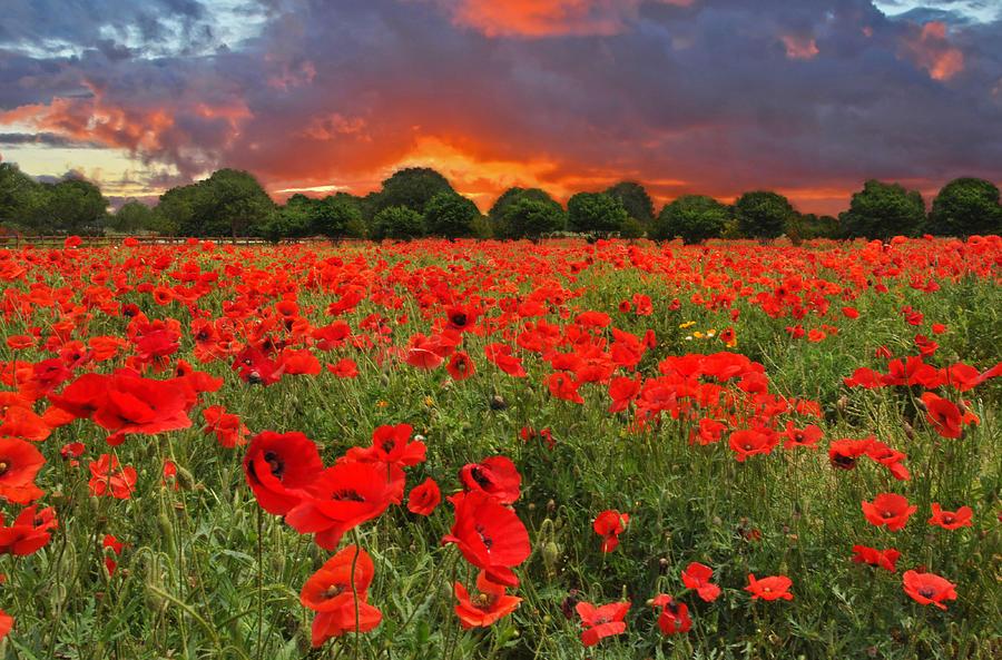 Texas Hill Country Photograph - Glorious Texas by Lynn Bauer