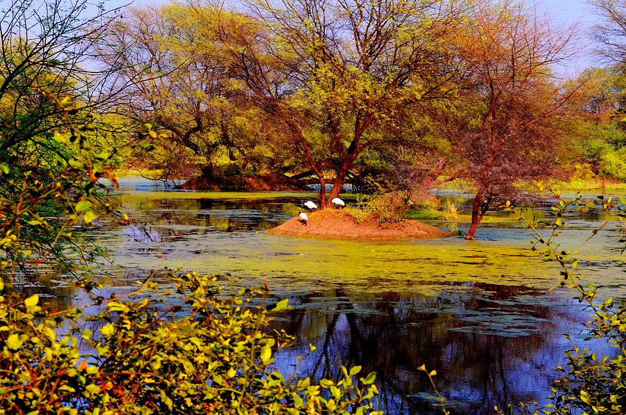 Landscape Photograph - Glossy Nature by Deepti Chahar