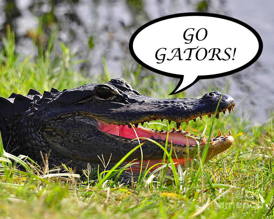 Go Gators Photograph - Go Gators Greeting Card by Al Powell Photography USA