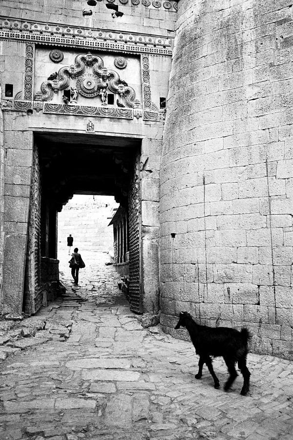 1984 Photograph - Goat by Jagdish Agarwal