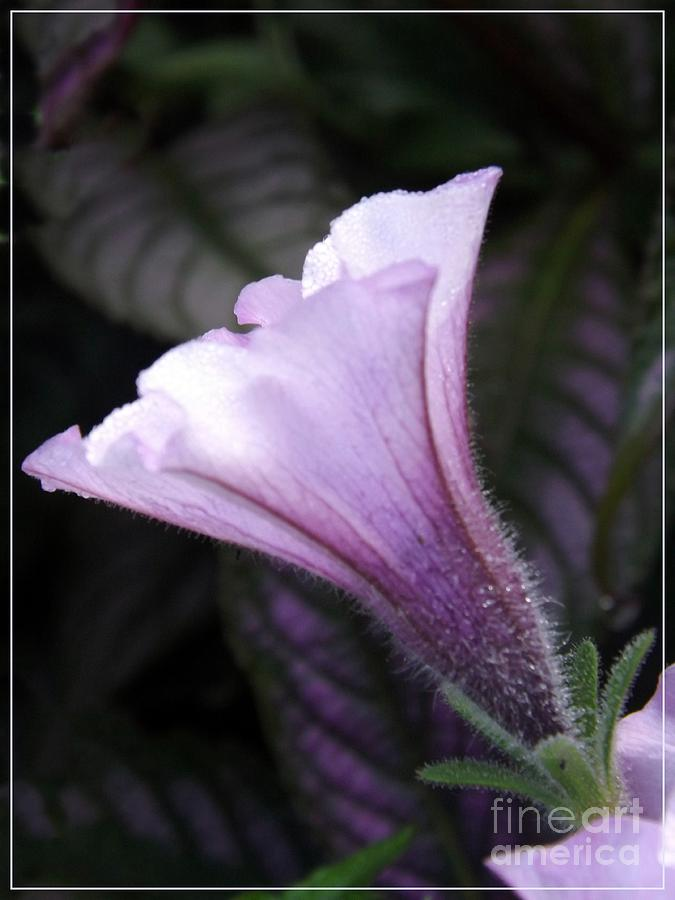 Flower Photograph - Gods Grace Is Enough by Sara  Raber