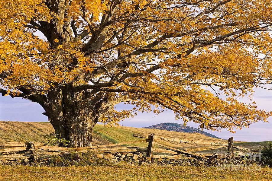 Fall Photograph - Golden Autumn by Alan L Graham